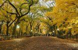"""""""El otoño es uno de los mayores espectáculos de la naturaleza y uno de los menos apreciados.""""  12 transformaciones que te muestran la belleza del otoño transformaciones en otono slide 156x100"""